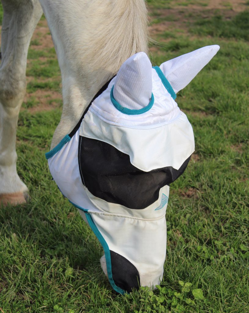 Elfie wearing the Ultra Pro Fly Mask